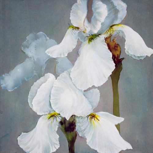 Maggie thompson gallery flower paintings 2007 white iris mightylinksfo